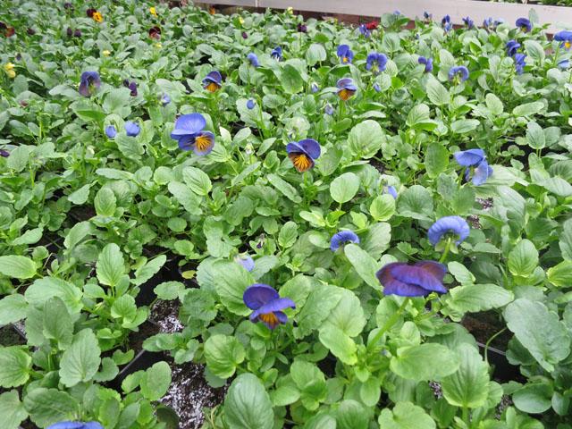 pukinmaen puutarha