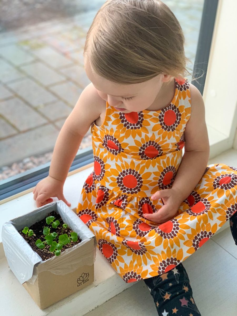 taimien kasvatus